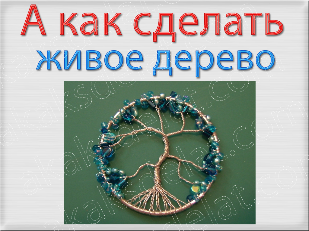 Как сделать живое дерево счастья своими руками фото комнатное