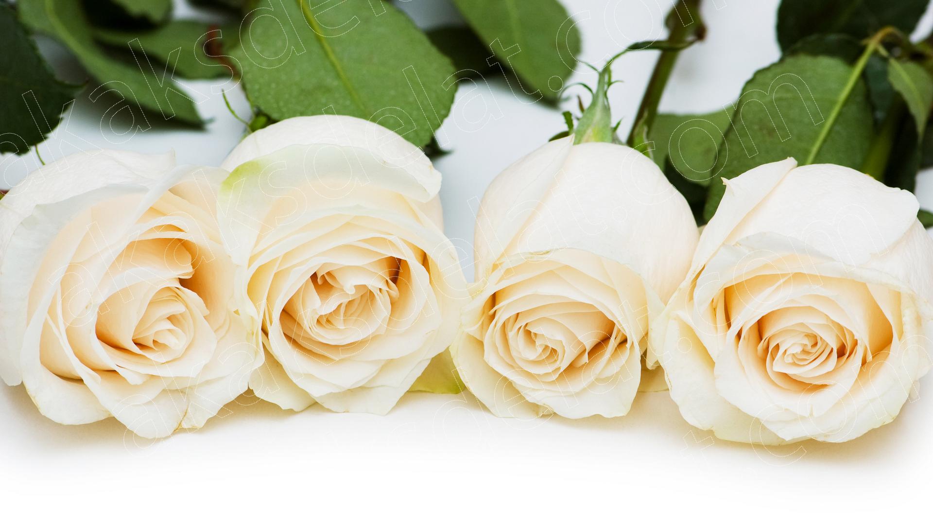 Как сделать разноцветную розу - разноцветные розы букет с разноцветными листьями фото
