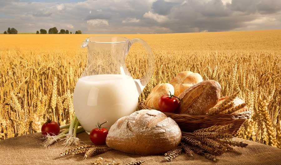 Хлеб с молоком в поле