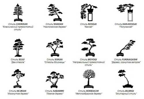 Виды бонсай