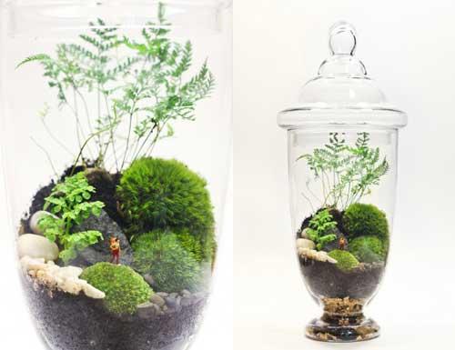 Миниатюрный сад в домашних условиях