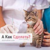Как сделать укол коту: медицинская помощь в ветеринарной клинике или дома