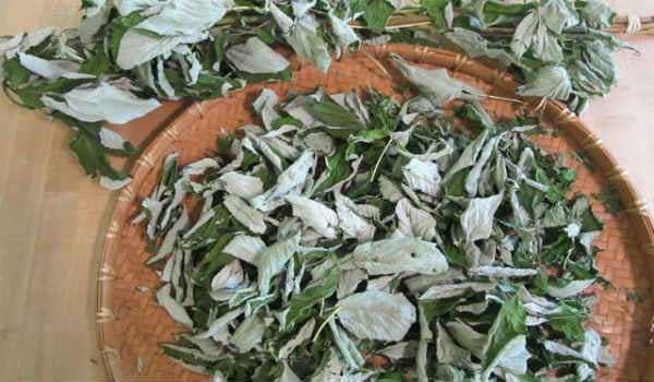 высушенные листья малины для чая