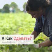Какие плюсы органического земледелия
