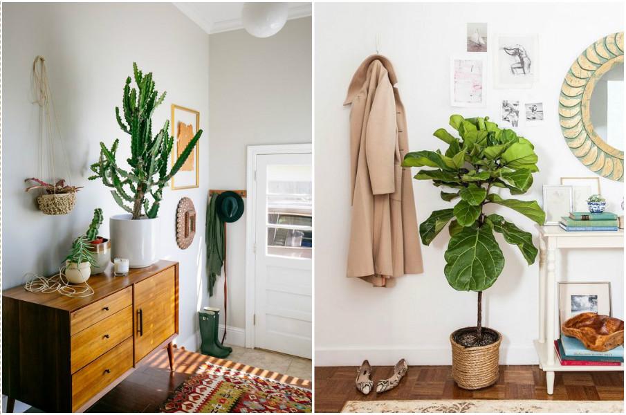 растения в прихожей
