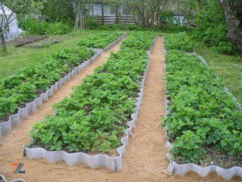 Садовые грядки из старого шифера