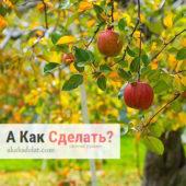 Как вырастить сад на приусадебном участке