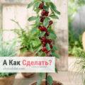 Как вырастить колоновидную черешню